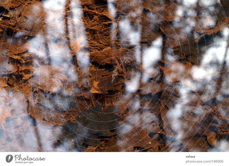 Auf dem Grund Wasser Natur Herbst Licht Reflexion & Spiegelung Lichterscheinung Urelemente Sensenmann Leben tief Meerestiefe Lichtquelle Blitzeffekt Tiefe Tod