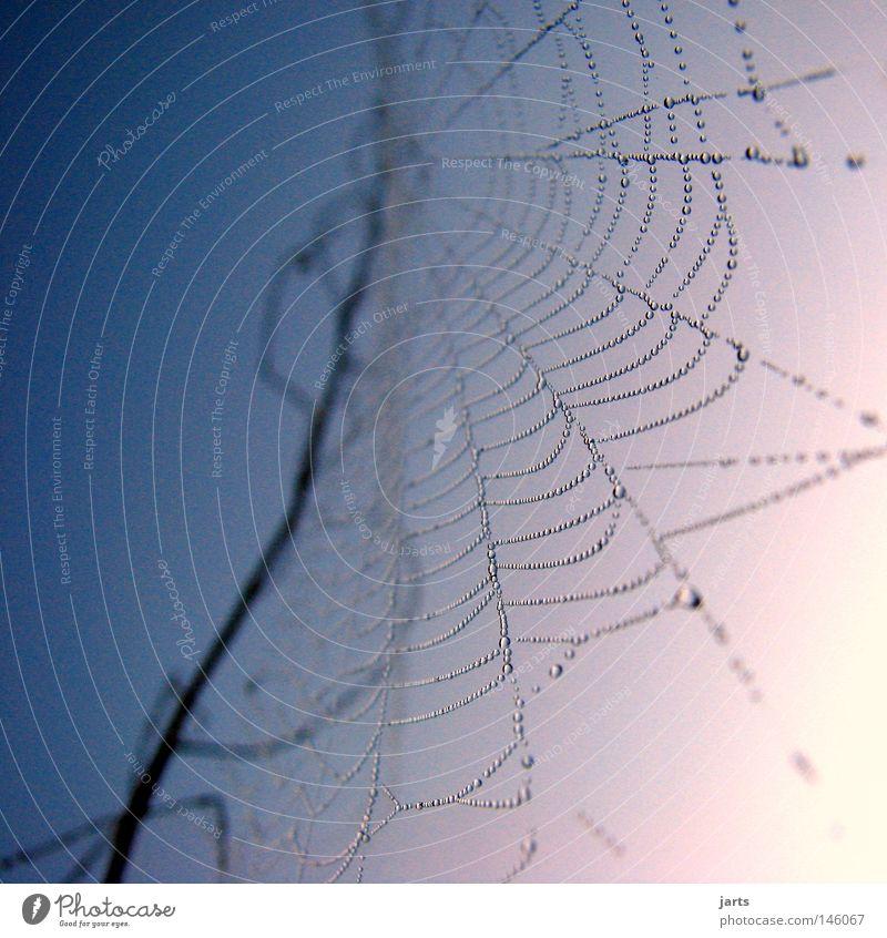 ..netzwerk.. Himmel Herbst Wassertropfen Netzwerk Tropfen Tau Spinne Spinnennetz Indian Summer