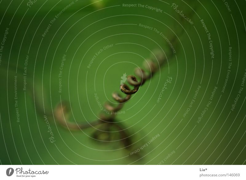 nature Natur Pflanze Gras Wachstum grün Reifezeit gestreift Spirale Halm unklar gedreht Brennpunkt fokussieren fein Tiefenschärfe Schnörkel Hintergrundbild