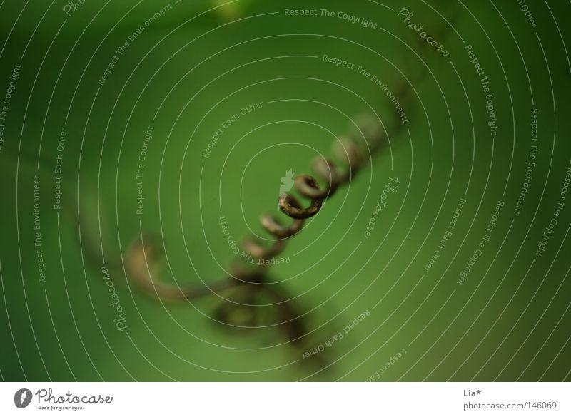 nature Natur Pflanze grün Gras Hintergrundbild Wachstum Tiefenschärfe Halm Spirale gestreift fein unklar Brennpunkt fokussieren Schnörkel gedreht