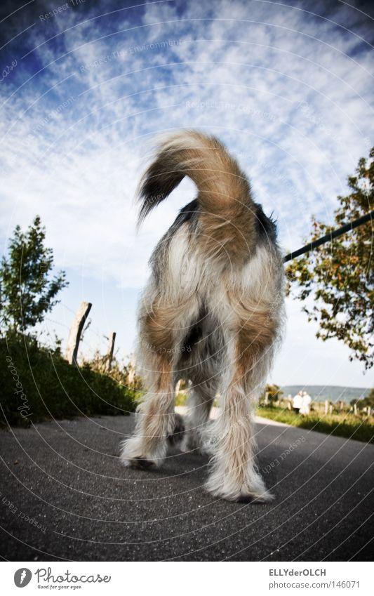 Kiss my Ass Tier Haare & Frisuren Hund Luft laufen Seil Spaziergang Hinterteil Fell Ekel Gesichtsausdruck Säugetier Haustier Schwanz Ablehnung Unlust