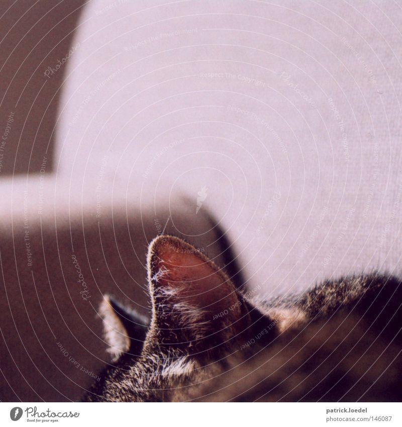 Lauscher Katze Ohr Sofa hören Radarstation schlafen Tier lümmeln tauchen Fell Haustier Futter So tun als ob Feline Katzenohr Haare & Frisuren getigert Sonnenbad