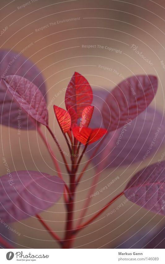Herbstfarben rot Beleuchtung Hoffnung Trauer Jahreszeiten Verzweiflung Geäst Trieb trösten Zweige u. Äste
