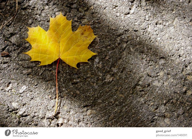 single Herbst Blatt Ahorn Ahornblatt gelb Asphalt Sonnenstrahlen Muster Einsamkeit Sonnenlicht Trauer Verzweiflung Straße Wege & Pfade Bodenbelag Stengel