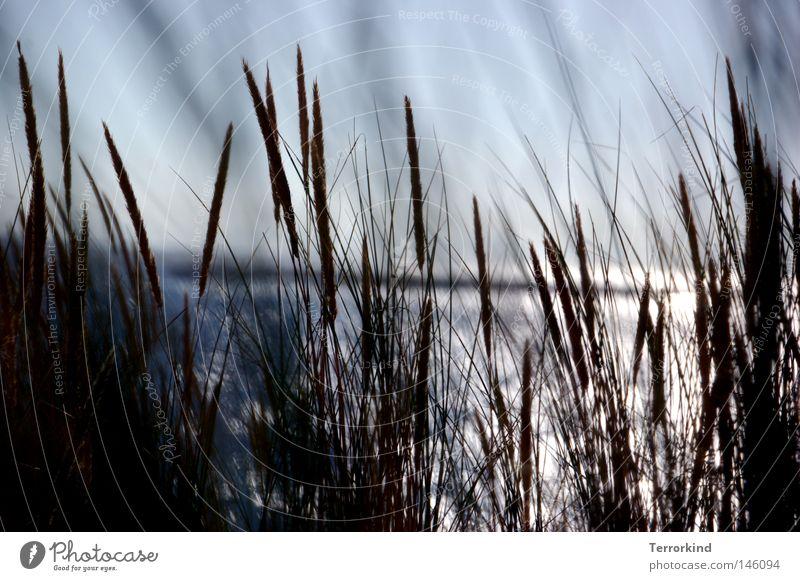 wir.hatten.keinen.Wein.aber.immerhin.das.Leben. Wasser Sonne Sommer Strand Meer Ferien & Urlaub & Reisen Gras träumen Sand Wasserfahrzeug Wellen Streifen