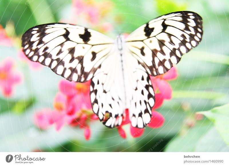 weiß wie schnee, schwarz wie ebenholz Natur Pflanze Tier Frühling Sommer Schönes Wetter Blume Blatt Blüte Garten Park Wiese Wildtier Schmetterling Flügel 1