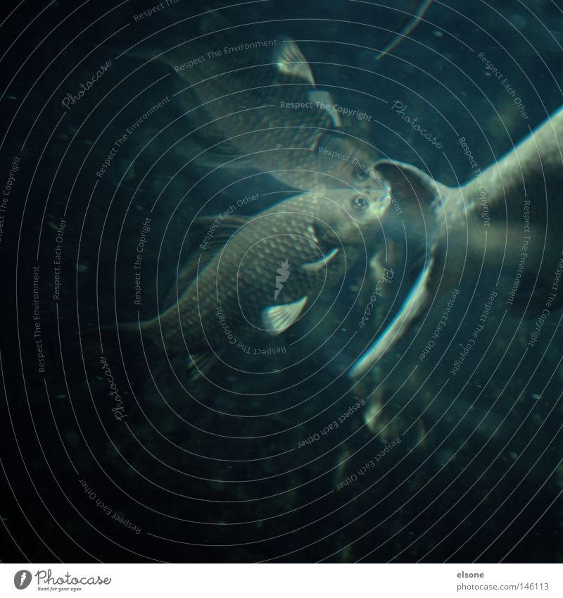 ::UNDERWATER LOVE:: Natur Wasser Meer Tier See Fisch Fisch Fluss Teich Tiefsee