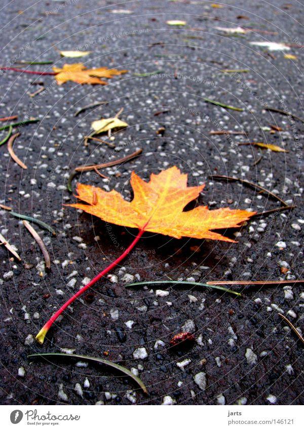 kurparkweg Herbst Blatt Herbstlaub mehrfarbig Park Kurpark Farbe Wege & Pfade Straße jarts