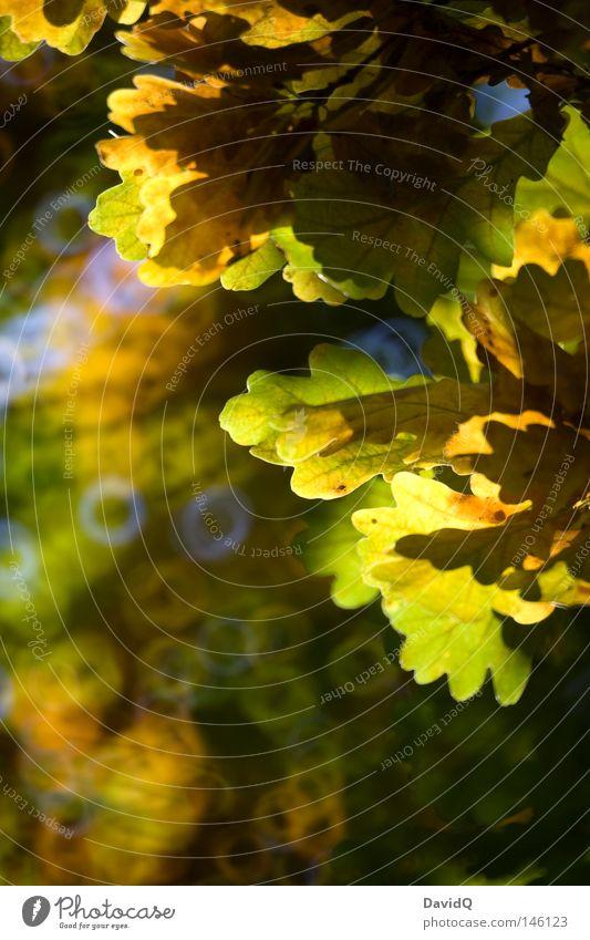 anti-herbstgrau Baum Geäst Zweige u. Äste Blatt Laubbaum Eiche Herbst Herbstbeginn Oktober Licht Schatten Kontrast Unschärfe Kreis Canolta