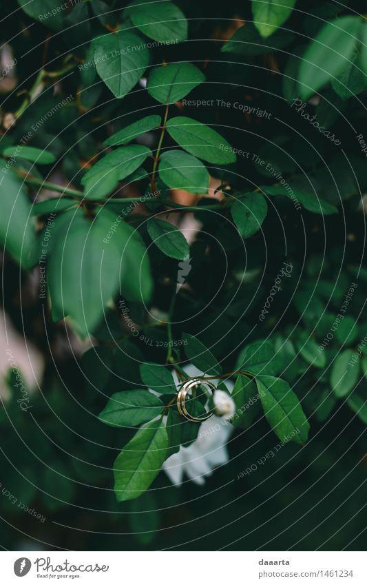 Ringe auf Grün Lifestyle elegant Stil Design Freude Leben harmonisch Sinnesorgane Erholung Freizeit & Hobby Spielen Abenteuer Freiheit Sommer Sommerurlaub