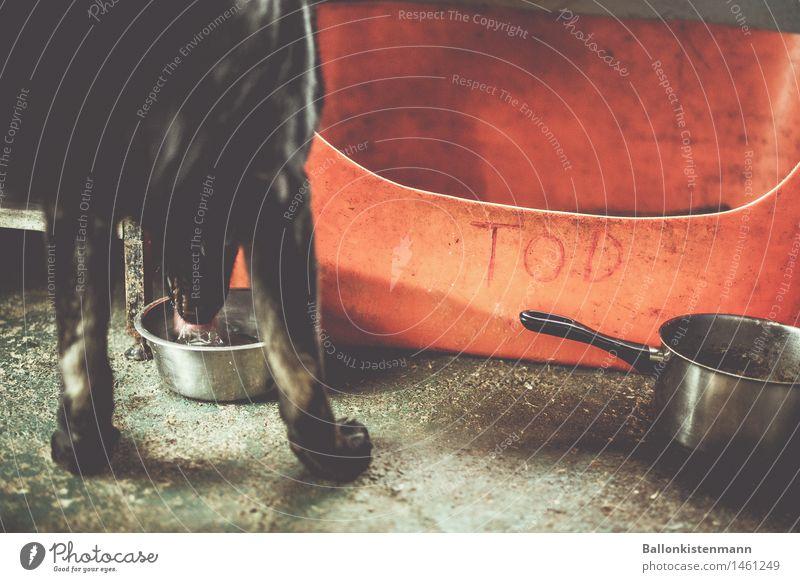 Und dann kam Tod. Häusliches Leben Tier Haustier Hund 1 alt Fressen trinken dreckig gruselig rot schwarz Tierliebe Traurigkeit Appetit & Hunger Durst Senior