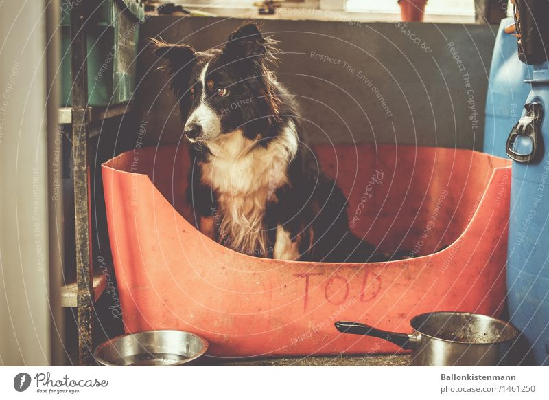 Tod, sitz! Haustier Hund hocken Blick sitzen Traurigkeit warten Häusliches Leben niedlich trist Stimmung Wachsamkeit bescheiden demütig Sorge Trauer Einsamkeit