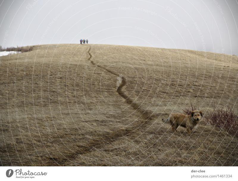 lonely Ausflug Ferne Mensch 4 Natur Landschaft Tier Urelemente Himmel Wolken Herbst Klima schlechtes Wetter Nebel Schnee Gras Wiese Haustier Wildtier Hund 1