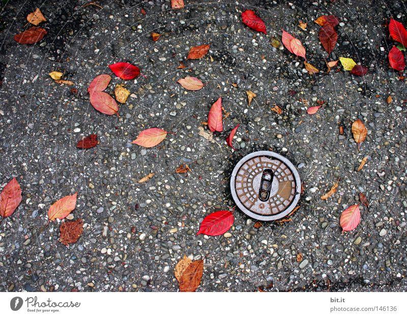 WASSERVERSORGUNG Natur Baum Pflanze rot Blatt Einsamkeit gelb Herbst Straße dunkel kalt grau Traurigkeit Regen Wellen Hintergrundbild