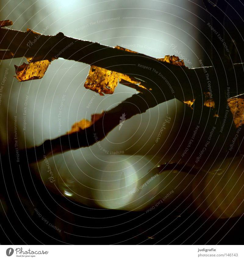 Licht im Wald Baum Geäst Zweige u. Äste Baumrinde Reflexion & Spiegelung dunkel hell Natur Umwelt kahl Herbst Winter träumen Farbe