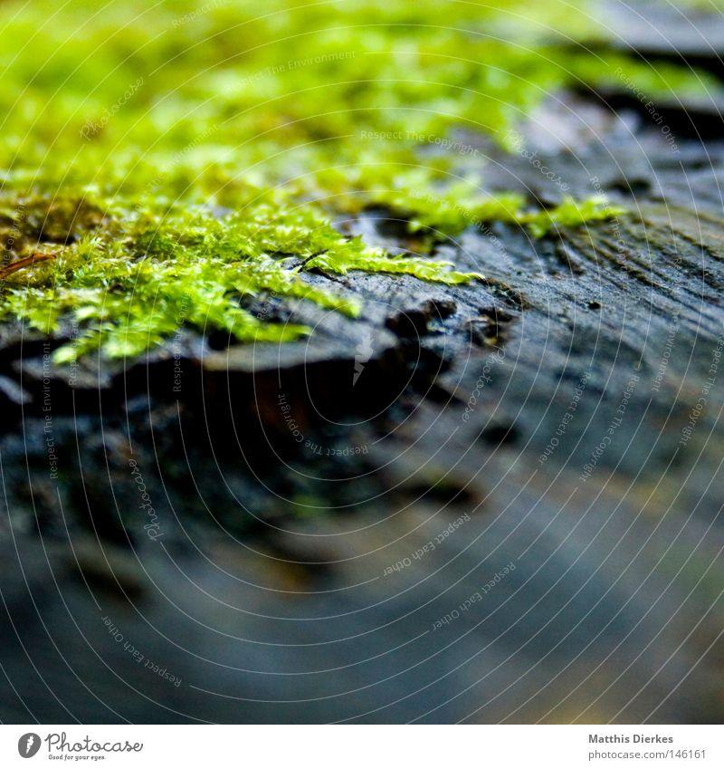 Ohne Moos... Natur schön Baum Pflanze Umwelt Herbst Gras grau Lampe Regen Urwald Quadrat feucht Tiefenschärfe Moos Botanik