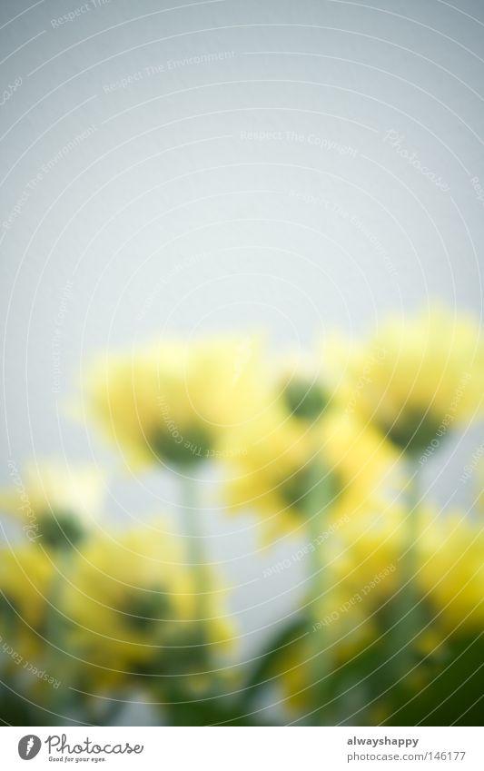 Kommunikation durch Blumen trashig Unschärfe gelb grün Pflanze Sprache Gesichtsausdruck Ausdruck Gefühle Sommer Blühend Blüte aufwärts Blick nach oben