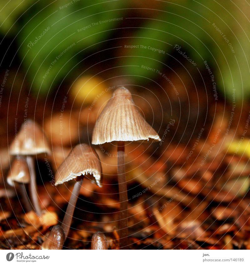 Pilzernte Herbst Oktober Jahreszeiten Sammlung Suche Wetter Ernte