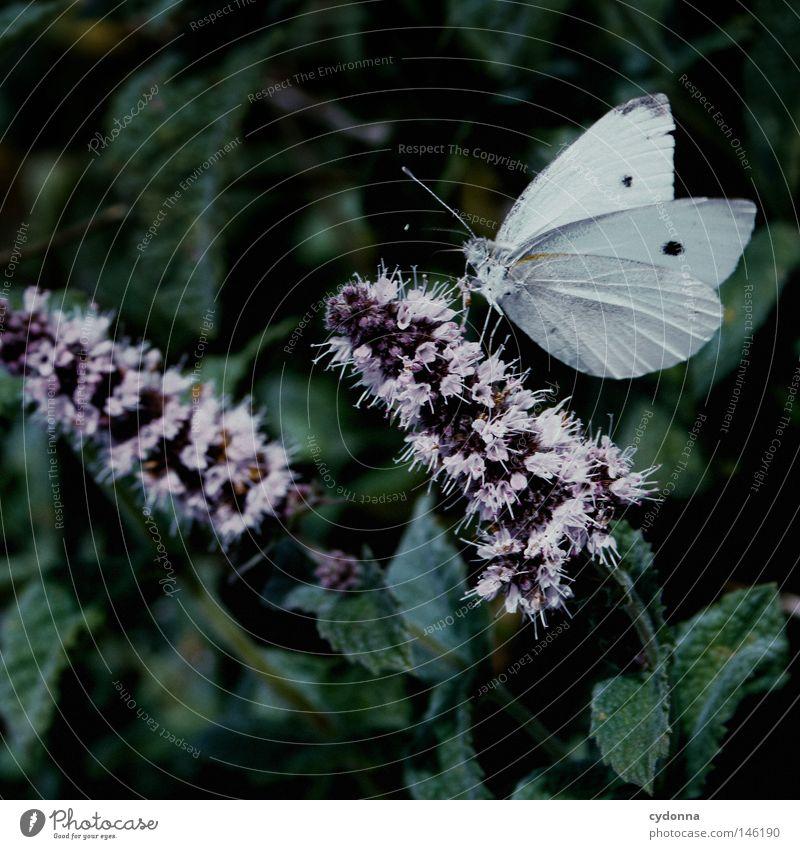 Pause Natur schön Blume grün Pflanze ruhig Ernährung Blüte klein Lebensmittel Insekt Idylle Schmetterling Staubfäden saugen