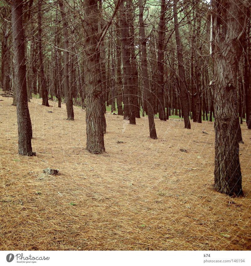 WALD Wald Baum Berghang Steigung abwärts Fichte Abholzung gefallen Rohstoffe & Kraftstoffe Tanne Pinie Baumrinde Suche Sammlung grün braun Natur wandern Jäger