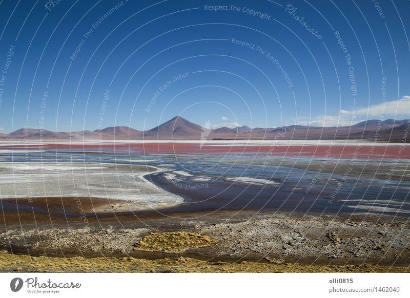 Laguna Colorada in Bolivien Himmel Natur Ferien & Urlaub & Reisen Wasser rot Landschaft Berge u. Gebirge See Vogel Tourismus Seeufer Süden Vulkan Algen Lagune