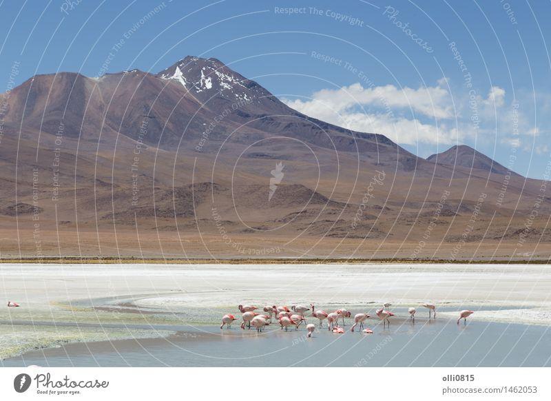 Natur Ferien & Urlaub & Reisen Landschaft Tier See Vogel rosa Park wild Tourismus Teich Süden Schwarm Vulkan Wildnis Südamerika