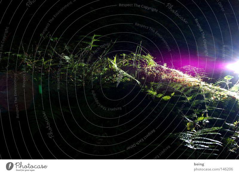 Lichtung, die Lösung für Luxusprobleme im Wald Blatt Herbst Gras Luft wandern Sträucher Dinge Urwald Pilz Moos Forstwirtschaft Spinnennetz Farn Nationalpark