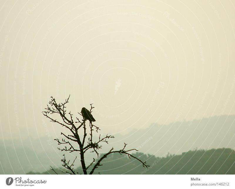 Einer Natur Baum Tier Herbst oben grau Vogel Nebel Umwelt hoch sitzen trist Aussicht natürlich Baumkrone kahl