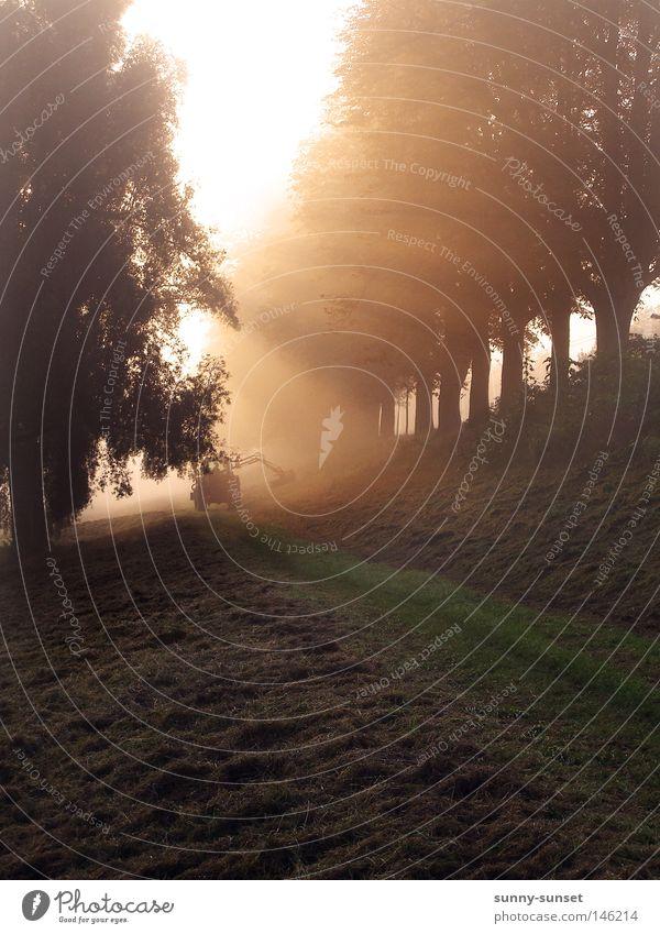 morning fog Baum Wiese Nebel Strahlung Schönes Wetter Traktor Morgendämmerung