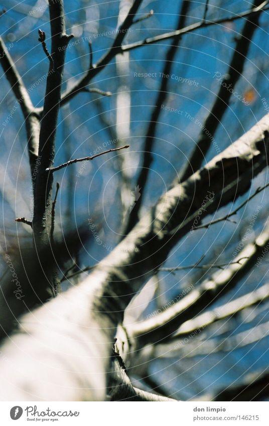 focus Himmel Natur blau weiß Baum Blatt Winter kalt Herbst oben hoch unten analog Tiefenschärfe Geäst Birke