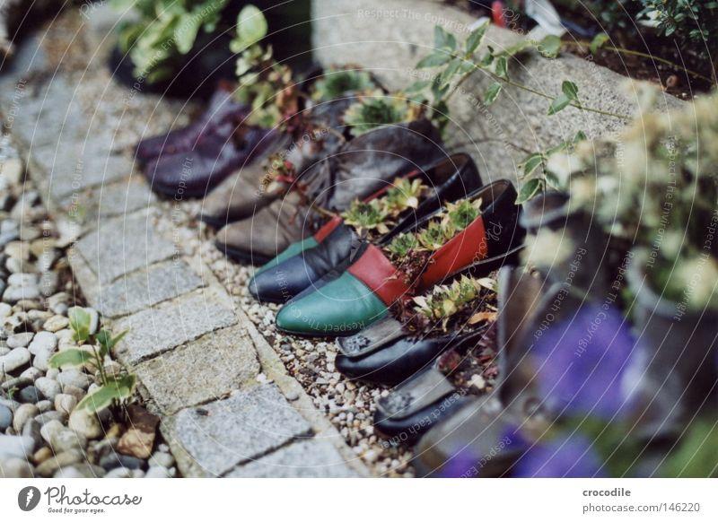 Schuhparade grün Pflanze rot Leben Garten Stein Park Schuhe gehen Wachstum violett Vergänglichkeit analog Stiefel Leder Topf