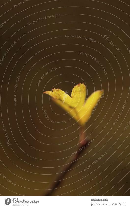 blättchen Umwelt Natur Pflanze Luft Herbst Blatt Grünpflanze Wildpflanze alt ästhetisch dünn authentisch einfach klein nah natürlich trist trocken wild weich