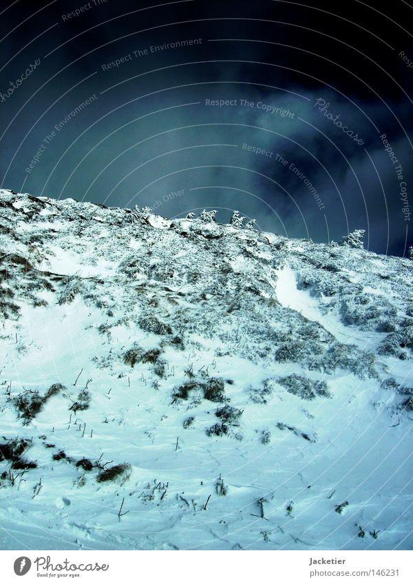 Apokalypse. Himmel weiß Baum blau Schnee Berge u. Gebirge grau Frankreich anstrengen Auvergne