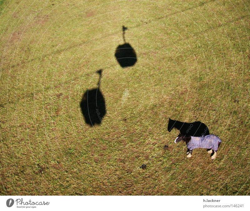 Einsames Pferd grün Wiese Rasen einzeln Säugetier Weide Schattenspiel Gondellift Pferdedecke