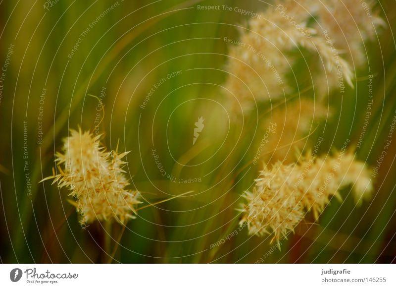 Gras grün schön Pflanze Sommer Farbe Wiese glänzend weich Frieden zart Weide Stengel Halm sanft beweglich