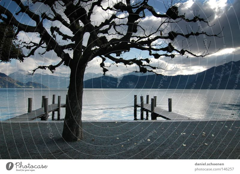 Herbstsee ruhig Wasser Berge u. Gebirge Alpen Schweiz See Aussicht Einsamkeit Baum Geäst Zweige u. Äste Blatt Wolken Himmel grau Freizeit & Hobby