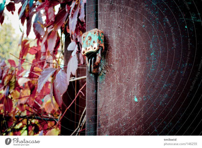 altes Vorhängeschloss Rost Schachtel Herbst Augenfalter Rust knackig Kasten gesperrt rot braun Blatt