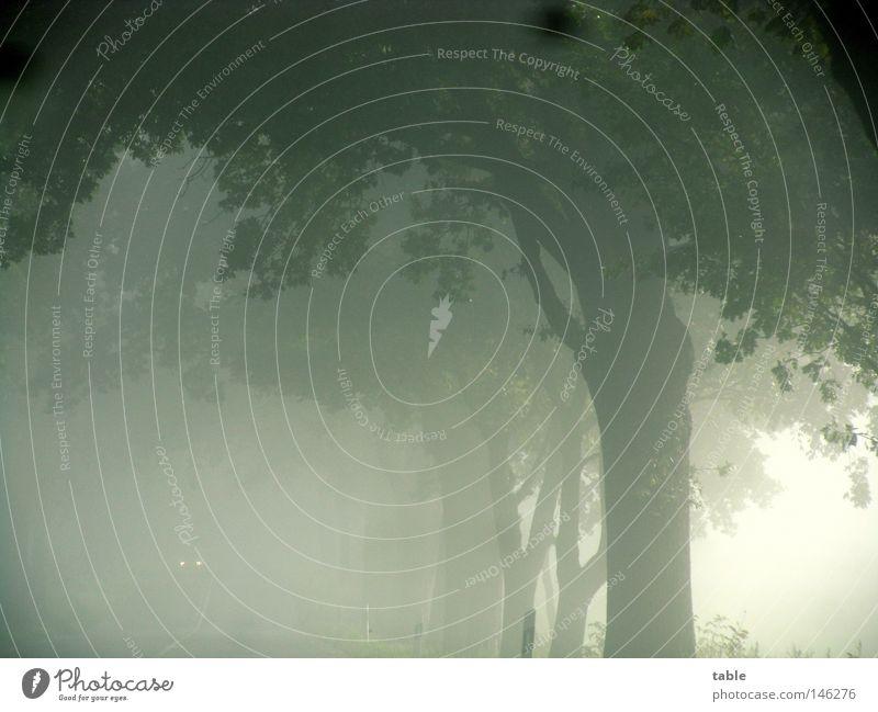 Gegenverkehr Baum Blatt dunkel kalt Herbst Gefühle PKW Nebel Ausflug gefährlich fahren Ast Baumkrone Allee Scheinwerfer Brandenburg