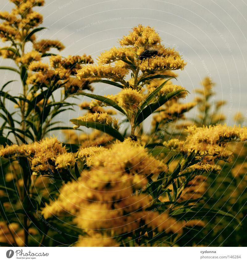 Versteck Natur schön Blume grün Pflanze ruhig gelb Blüte klein Pause Insekt Idylle verstecken filigran verborgen