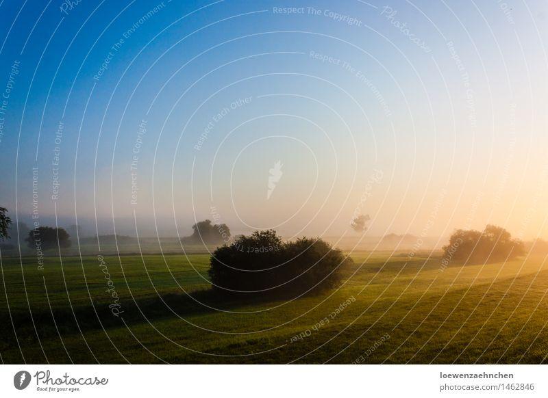 Neblige Sonne Umwelt Natur Landschaft Pflanze Himmel Wolkenloser Himmel Sonnenaufgang Sonnenuntergang Sonnenlicht Sommer Wetter Schönes Wetter Nebel Sträucher