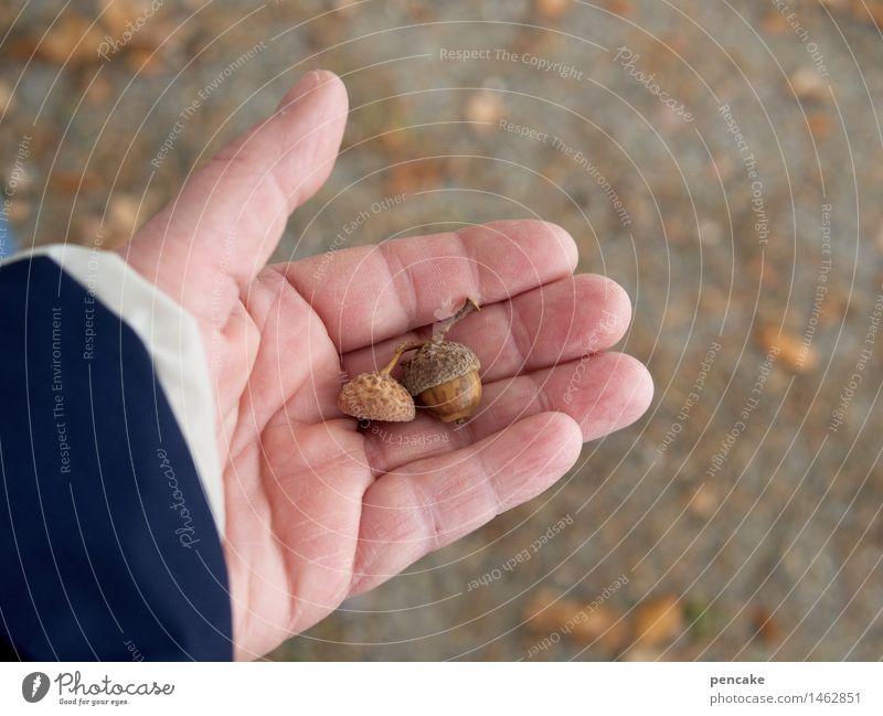 gib nüsschen! Natur Hand Blatt Herbst Lebensmittel Sand Erde authentisch Urelemente trocken gut Nuss Eicheln Wintervorrat