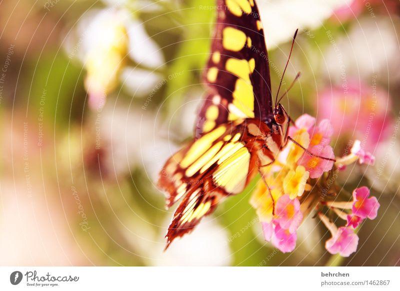 mädchenfarben Natur Pflanze Tier Frühling Sommer Schönes Wetter Blume Blatt Blüte Garten Park Wiese Wildtier Schmetterling Tiergesicht Flügel Facettenauge Beine