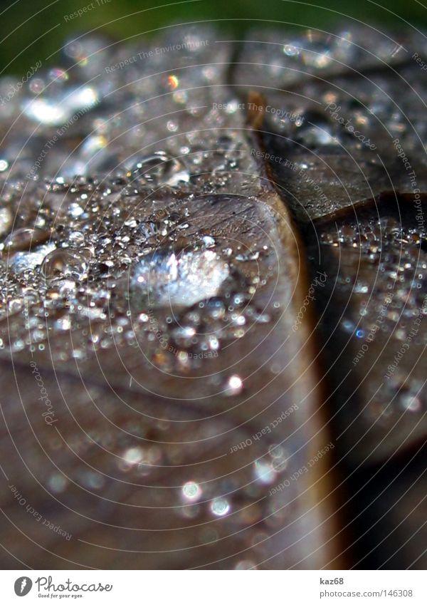 Herbst Regen Wasser Blatt Wetter nass feucht Pflanze glänzend schlechtes Wetter Gefäße Wassertropfen Tropfen braun grün Eichenblatt Gewitter silber Diamant
