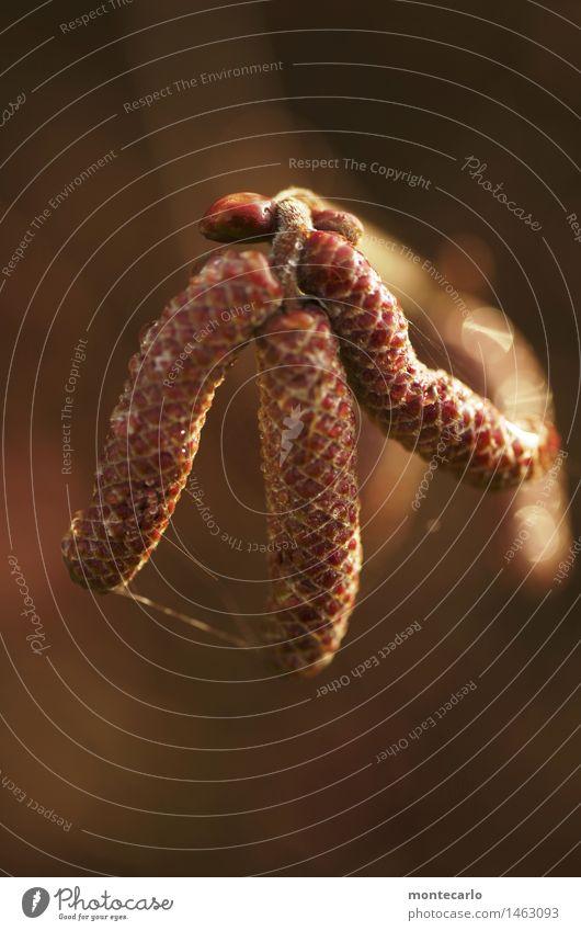 würmer Umwelt Natur Pflanze Sträucher Blüte Grünpflanze Wildpflanze Blattknospe dünn authentisch einfach frisch kalt klein lang nah natürlich rund Wärme wild