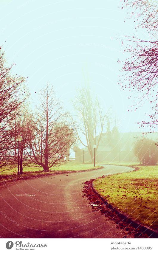 immer geradeaus Umwelt Natur Landschaft Urelemente Erde Himmel Wolkenloser Himmel Sonnenlicht Herbst Klima Schönes Wetter Nebel Baum Sträucher Park Wiese