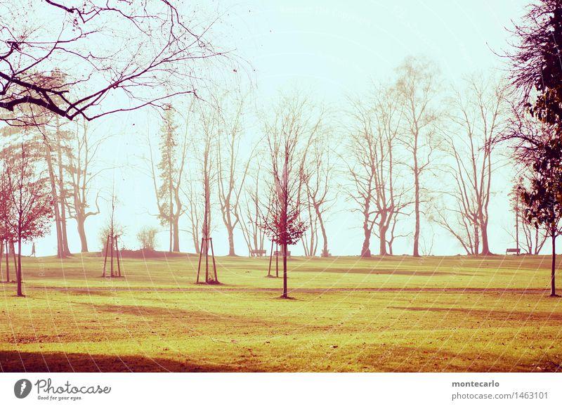 frische luft Umwelt Natur Landschaft Urelemente Erde Luft Himmel Wolkenloser Himmel Sonnenlicht Herbst Klima Schönes Wetter Nebel Pflanze Baum Gras Blatt