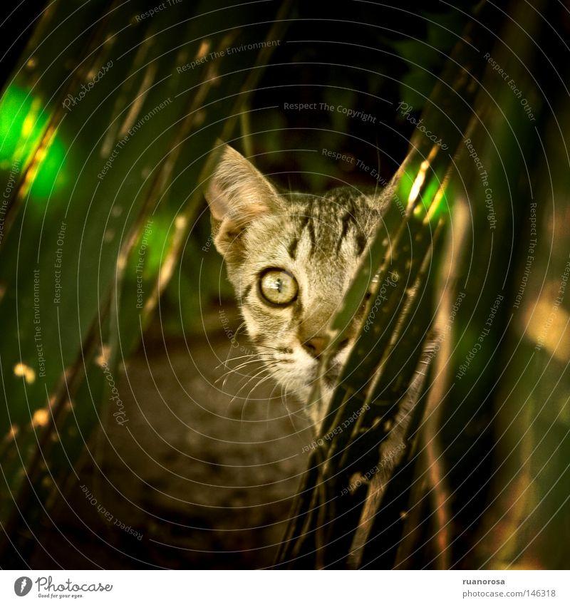 Katze Tier Säugetier Versteck Tiergesicht Ohr Außenohr Haare & Frisuren Auge Natur Nase Mund Jagd Dienstleistungsgewerbe verborgen Überraschung Behaarung