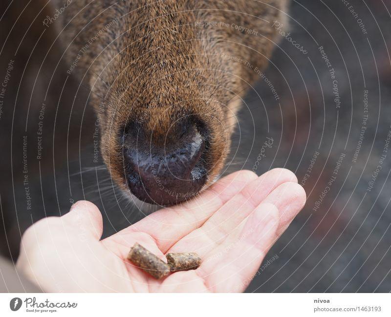 Reh III Mensch Natur ruhig Tier Erwachsene Lebensmittel braun Zusammensein frei Idylle Wildtier Finger beobachten Neugier Sicherheit nah
