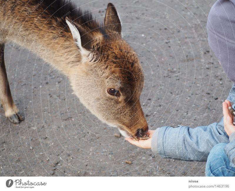 RehII Lebensmittel Essen Ausflug Abenteuer maskulin Kind Junge 1 Mensch 3-8 Jahre Kindheit Zoo Natur Wege & Pfade Mantel Mütze Tier Wildtier Fell berühren