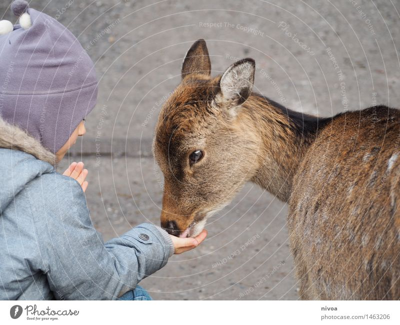 Reh Lebensmittel Ausflug Abenteuer feminin Kind Junge 1 Mensch 3-8 Jahre Kindheit Natur Winter Wege & Pfade Mantel Mütze Tier Wildtier beobachten berühren